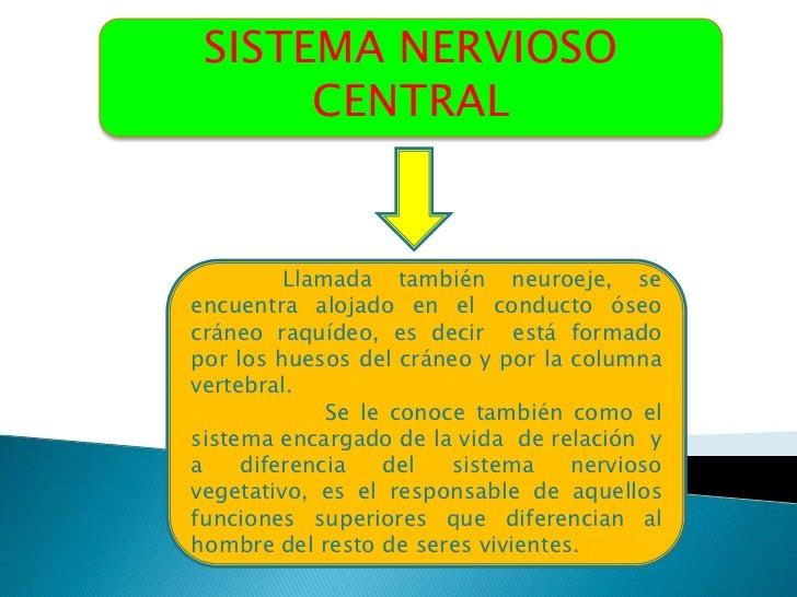 SISTEMA NERVIOSO      CENTRAL         Llamada también neuroeje, seencuentra alojado en el conducto óseocráneo raquídeo, es...