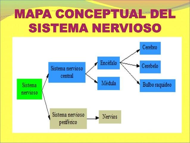 Considerando que las neuronas son células que no se reproducen, debemos cuidarlas de la siguiente manera:Evitar consumir ...