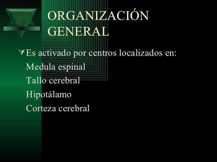 ORGANIZACIÓN       GENERAL Es activado por centros localizados en:  Medula espinal  Tallo cerebral  Hipotálamo  Corteza c...