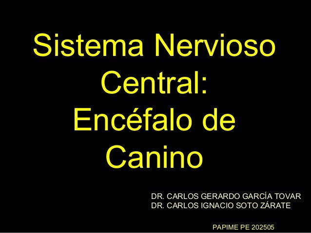 Sistema Nervioso     Central:   Encéfalo de     Canino       DR. CARLOS GERARDO GARCÍA TOVAR       DR. CARLOS IGNACIO SOTO...