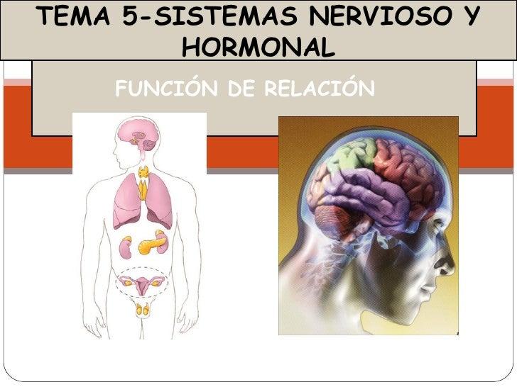 TEMA 5-SISTEMAS NERVIOSO Y         HORMONAL    FUNCIÓN DE RELACIÓN