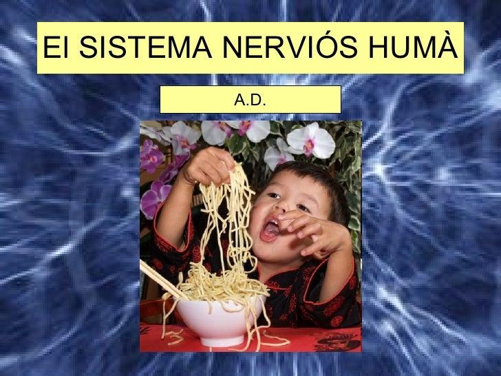 Sistema NervióS A.D.