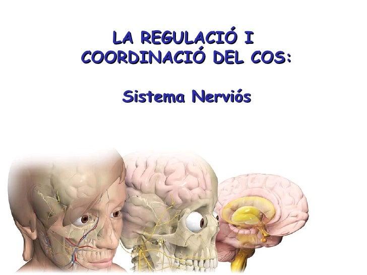 Sistema nerviós