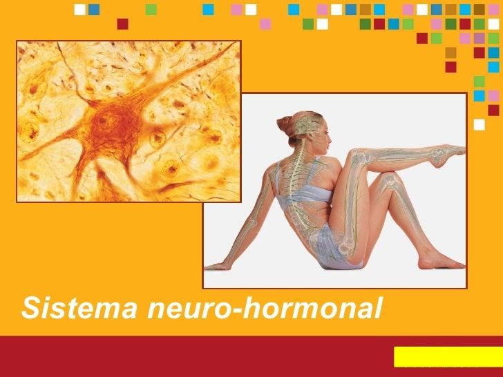 Sistema neuro   hormonal (aulas)