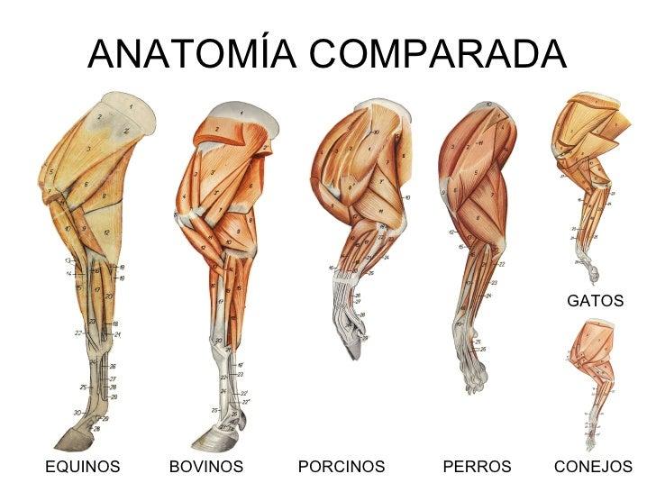 Tipos de anatomia veterinaria