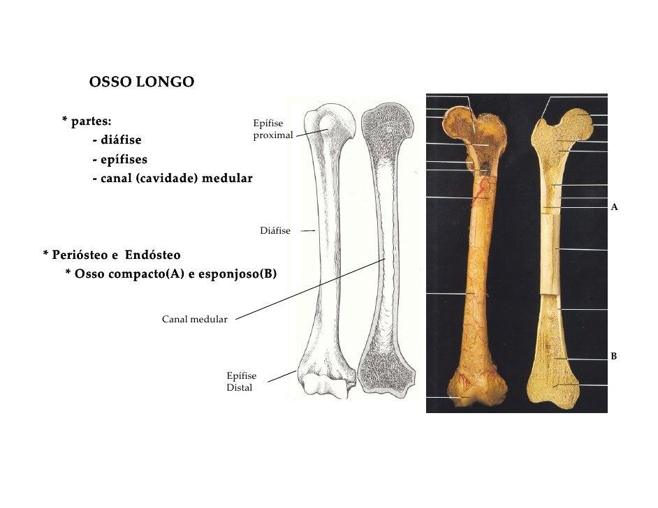 Sistema osseo for Esterno e um osso irregular