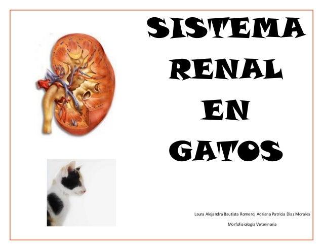 SISTEMA RENAL   EN GATOS  Laura Alejandra Bautista Romero; Adriana Patricia Díaz Morales                   Morfofisiología...