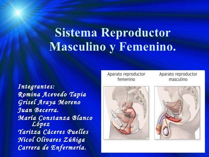 Sistema reproductor masculino y femenino 2009