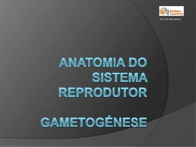 Prof. Ana Rita Rainho