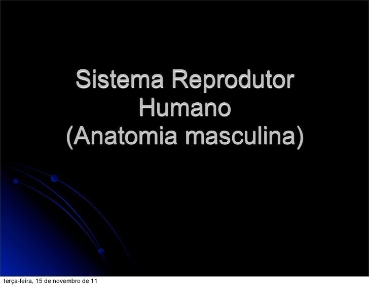 Sistema Reprodutor                           Humano                     (Anatomia masculina)terça-feira, 15 de novembro de...