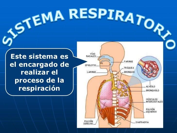 Sistemarespiratorio 101114173541-phpapp01
