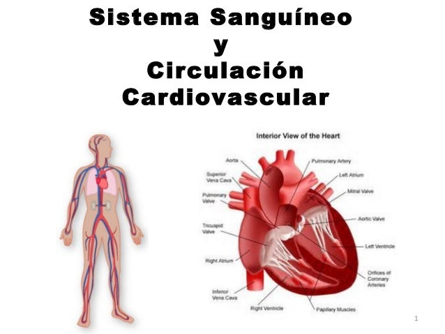 Sistema Sanguíneo y Circulación Cardiovascular  1