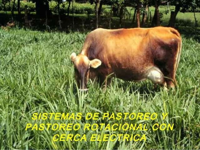 SISTEMAS DE PASTOREO Y PASTOREO ROTACIONAL CON CERCA ELECTRICA