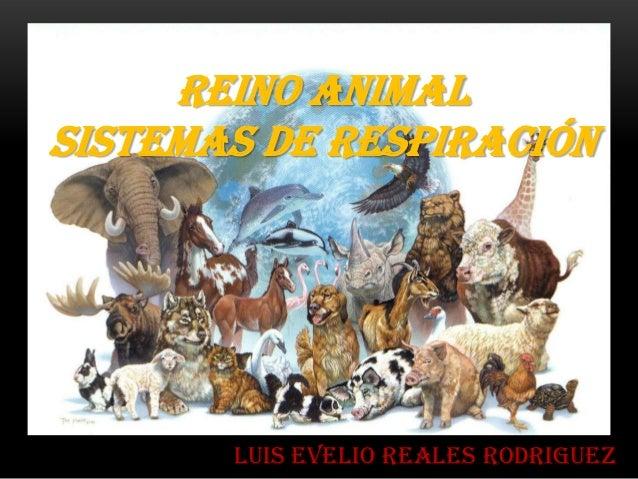 REINO ANIMALSISTEMAS DE RESPIRACIÓN       LUIS EVELIO REALES RODRIGUEZ