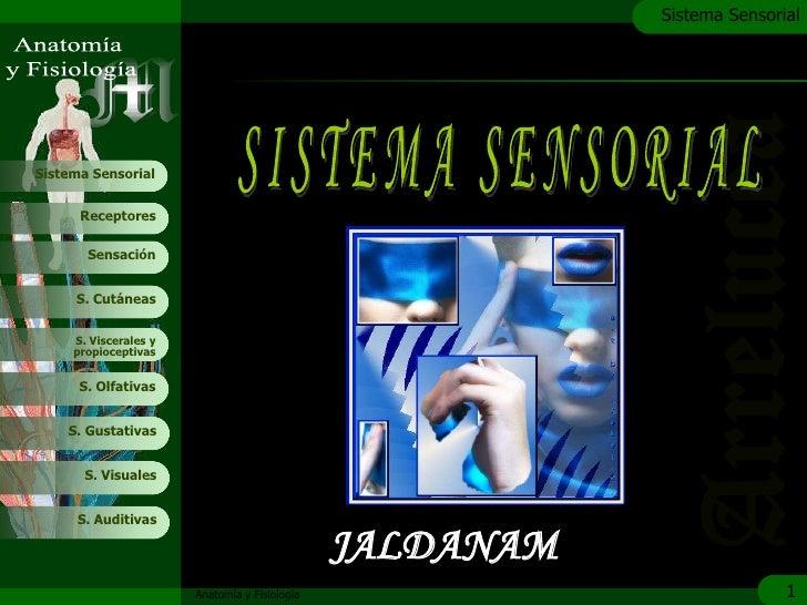 c                                                           Sistema Sensorial     Sistema Sensorial         Receptores    ...