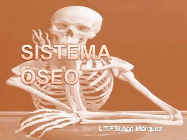 Se divide en dos partes  Esqueleto axial Forman el eje longitudinal del cuerpo  Esqueleto apendicular Huesos de los miem...