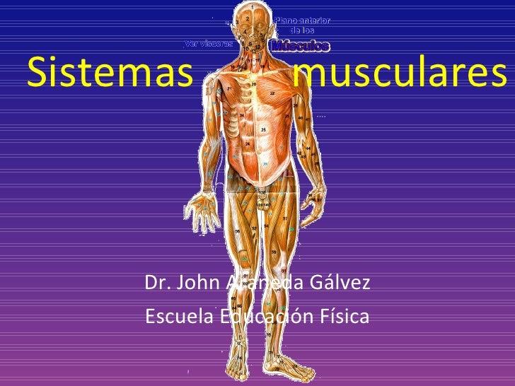 Sistemas  musculares Dr. John Araneda Gálvez Escuela Educación Física