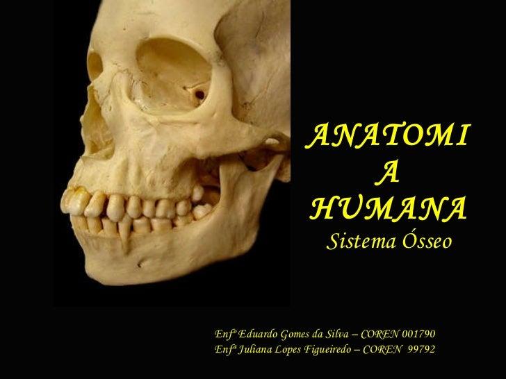 ANATOMIA HUMANA Sistema Ósseo Enfº Eduardo Gomes da Silva – COREN 001790 Enfª Juliana Lopes Figueiredo – COREN  99792