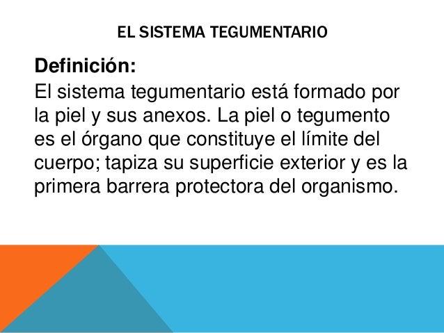 Sistema tegumentario for Vivero definicion