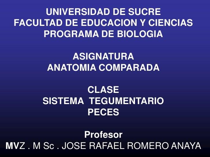 UNIVERSIDAD DE SUCRE<br />FACULTAD DE EDUCACION Y CIENCIAS<br />PROGRAMA DE BIOLOGIA<br />ASIGNATURA<br />ANATOMIA COMPARA...