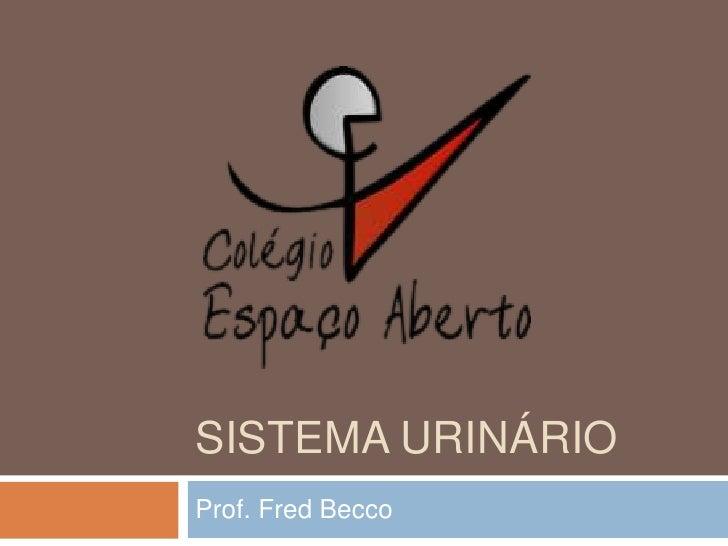 Sistema urinário<br />Prof. Fred Becco<br />