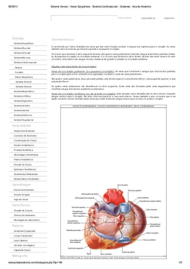 08/09/13 Sistema Venoso - Vasos Sangüíneos - Sistema Cardiovascular - Sistemas - Aula de Anatomia www.auladeanatomia.com/s...