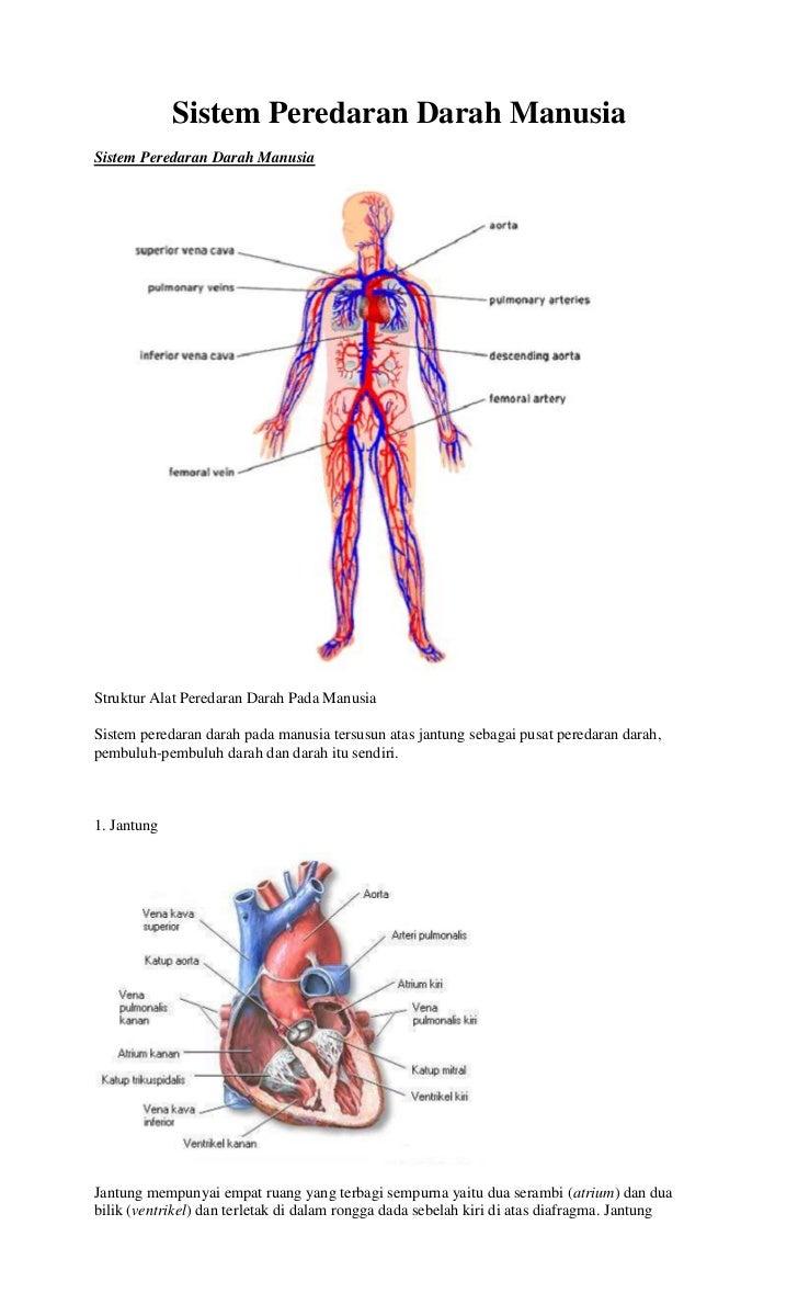 Sistem Peredaran Darah ManusiaSistem Peredaran Darah ManusiaStruktur Alat Peredaran Darah Pada ManusiaSistem peredaran dar...