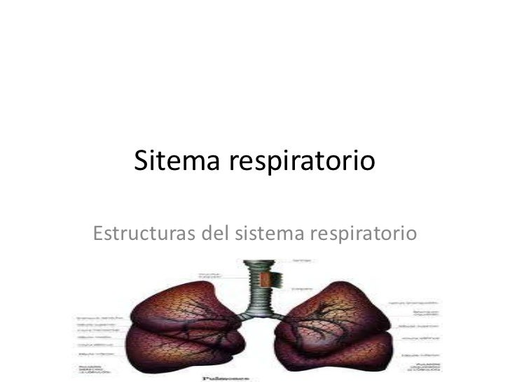 Sitema respiratorioEstructuras del sistema respiratorio