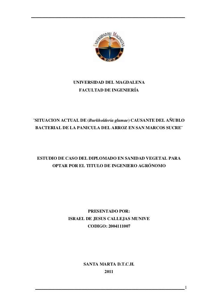 SITUACION ACTUAL DE (Burkholderia glumae) CAUSANTE DEL AÑUBLO BACTERIAL DE LA PANICULA DEL ARROZ EN SAN MARCOS SUCRE