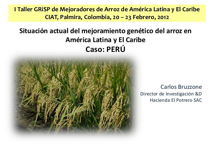 I Taller GRiSP de Mejoradores de Arroz de América Latina y El Caribe            CIAT, Palmira, Colombia, 20 – 23 Febrero, ...