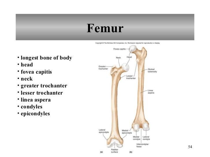 Skeletal System Pictures