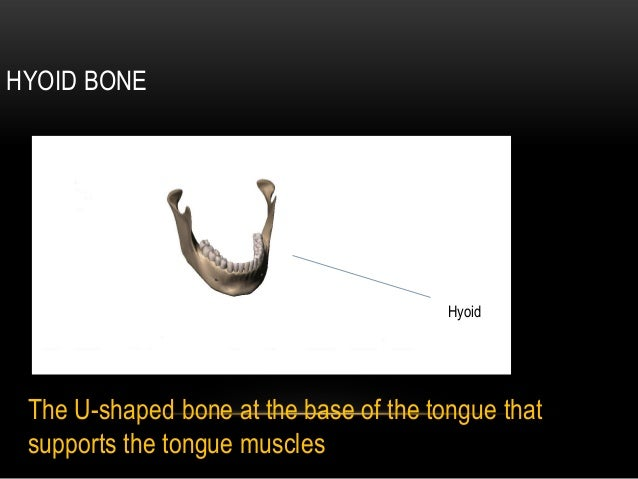 HYOID BONE                                        Hyoid The U-shaped bone at the base of the tongue that supports the tong...