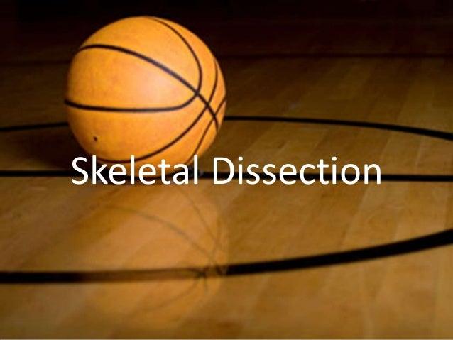 Skeletal dissection