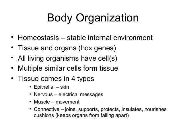 Body Organization•   Homeostasis – stable internal environment•   Tissue and organs (hox genes)•   All living organisms ha...