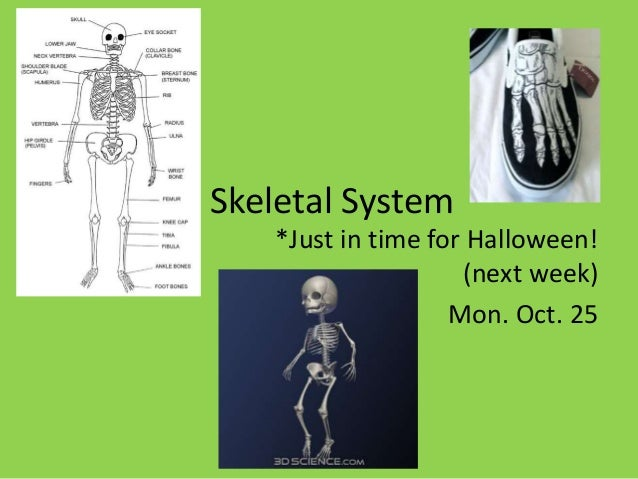 Skeletal System *Just in time for Halloween! (next week) Mon. Oct. 25