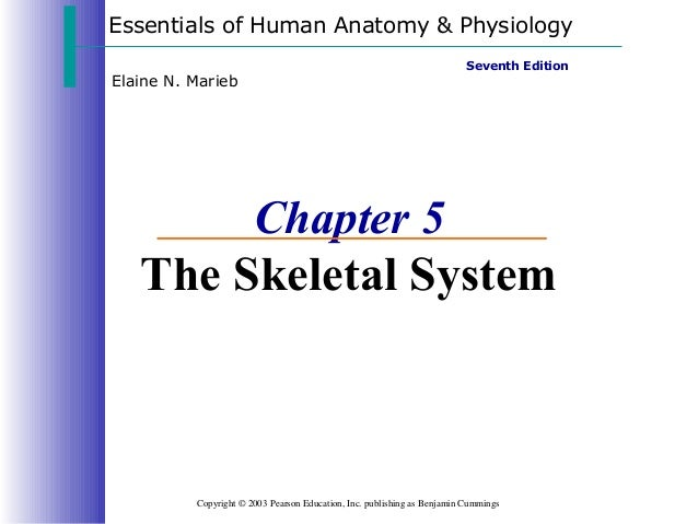 Essentials of Human Anatomy & Physiology Copyright © 2003 Pearson Education, Inc. publishing as Benjamin Cummings Seventh ...