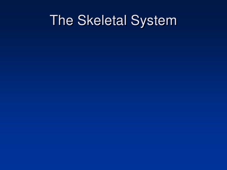 The Skeletal System<br />