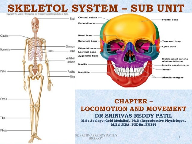 SKELETOL SYSTEM – SUB UNIT                                       CHAPTER –                                LOCOMOTION AND M...