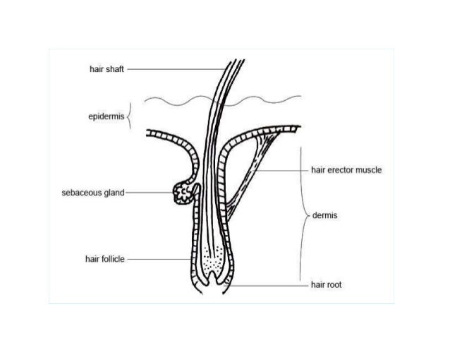 Image result for label parts of  hair