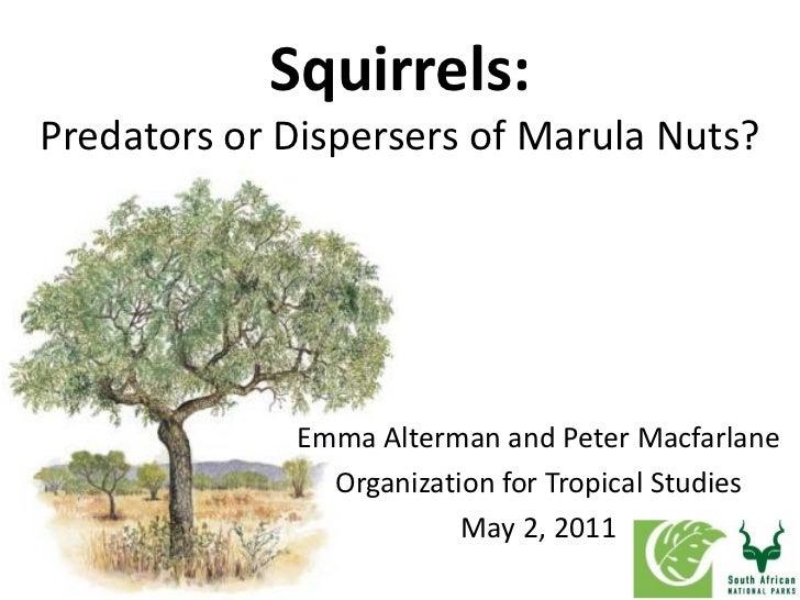 Squirrels:Predators or Dispersers of Marula Nuts?             Emma Alterman and Peter Macfarlane               Organizatio...