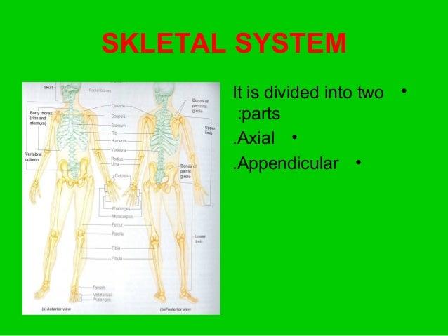 Skeletal System - Anatomy