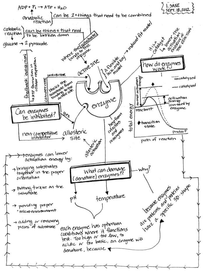 Enzyme Concept Map