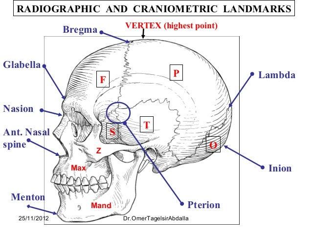 Vertex in anatomy