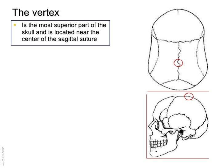 Head skeleton anatomy