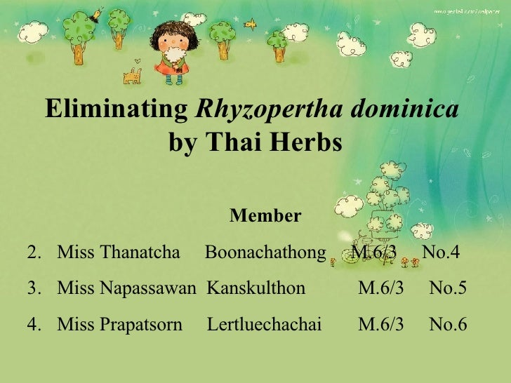 Eliminating  Rhyzopertha dominica   by Thai Herbs <ul><li>Member </li></ul><ul><li>Miss Thanatcha  Boonachathong  M.6/3  N...