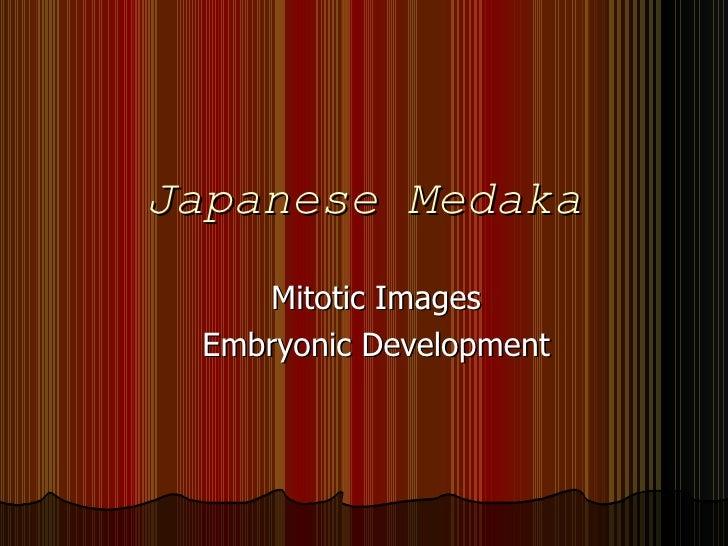 Japanese Medaka Mitotic Images Embryonic Development