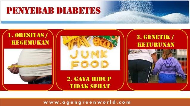 Obat Obesitas Herbal Alami Tradisional ...