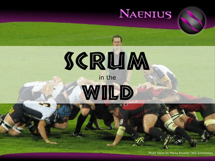 in the Wild SCRUM Photo taken by Maree Reveley (aka Somerslea)