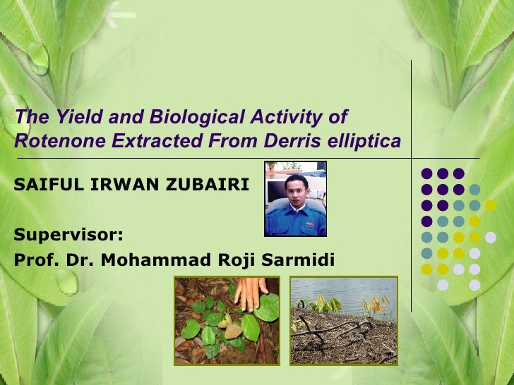 SAIFUL IRWAN ZUBAIRI Supervisor: Prof. Dr. Mohammad Roji Sarmidi The Yield and Biological Activity of Rotenone Extracted F...