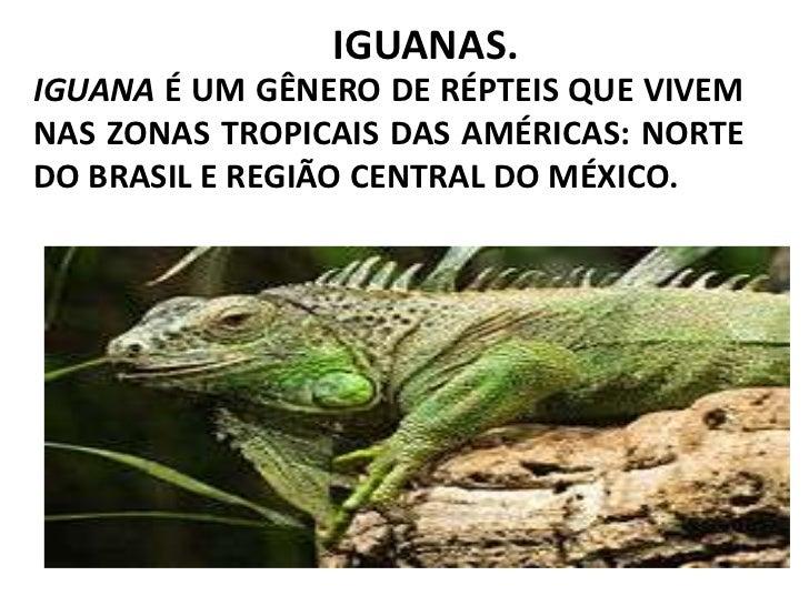 IGUANAS.<br />Iguana é um gênero de RÉPTEIS QUE VIVEM Nas zonas tropicais das AMÉRICAS: norte do BRASIL e região central d...